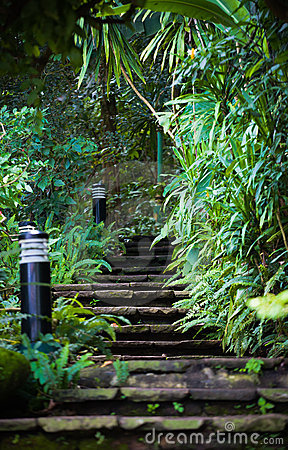 Stone stairs in the forest