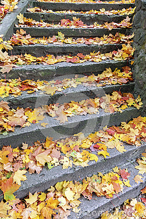 Free Stone Steps Covered With Maple Leaves Royalty Free Stock Image - 61161856