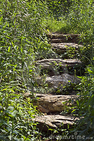 Free Stone Steps In Foliage Stock Photography - 5026082