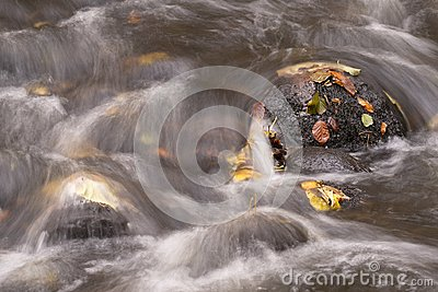 A stone in a stream covered with moss and yellow leaves