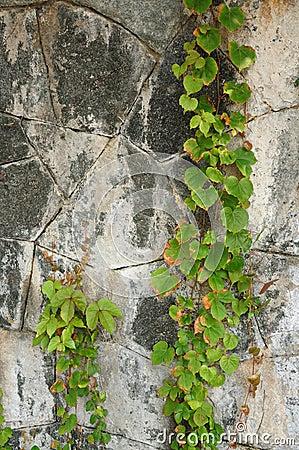 Free Stone Wall Royalty Free Stock Photo - 13545775