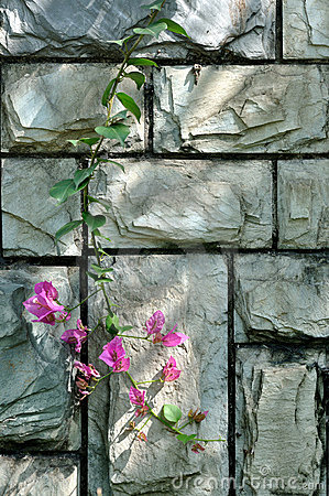 Stone wall in cyan color and pink flower