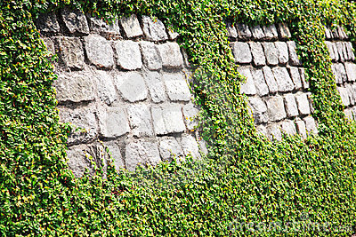 Stone wall with hedge
