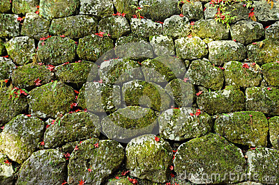 Stone Wall with moss textured