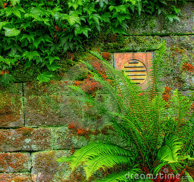 Stone wall with vegetation