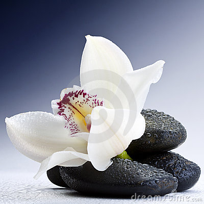 Free Stones And Orchid Royalty Free Stock Photos - 14448398
