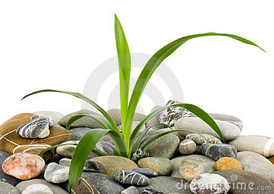 Stones and green plant
