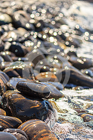 Free Stones On Beach And Sea Wave Royalty Free Stock Photos - 72953618