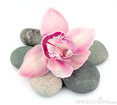 Stones and pink orchid flowers