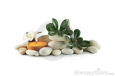 Stones and plant with green leaves