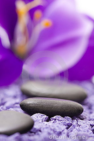 Stones with purple flower