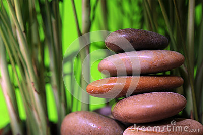 Stones and small bamboo tree