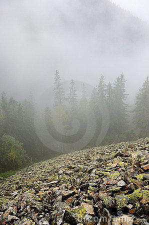 Stony slope in forested mountains through the fog.