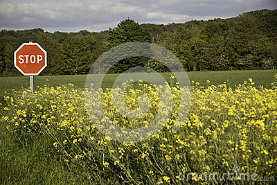 Stop on a field