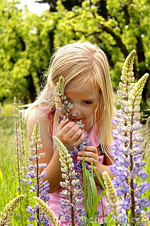 Free Stop & Smell The Flowers Royalty Free Stock Photography - 19796387