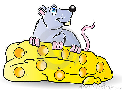 Stor ost äter den gråa musen