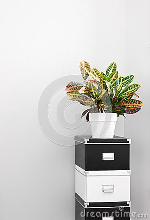 Free Storage Boxes And Green Plant In A Room Corner Stock Photography - 27113842