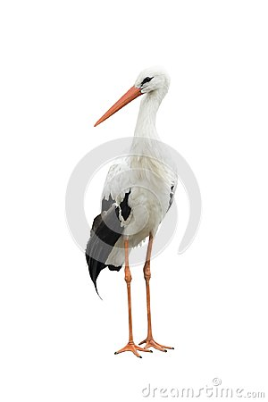 Free Stork Royalty Free Stock Photos - 108582848