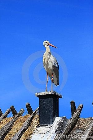 Free Stork Royalty Free Stock Photography - 5821817