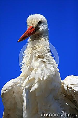 Free Stork Stock Photo - 5821910