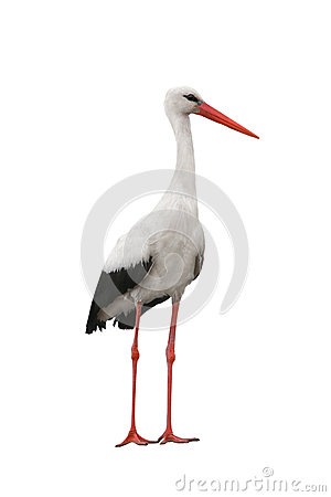 Free Stork Royalty Free Stock Photos - 77389068
