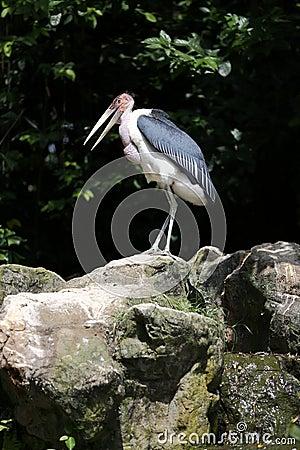 Stork on cliff