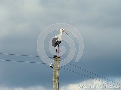 A Stork on a column