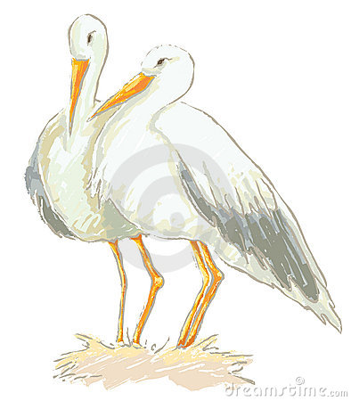 Stork couple vector