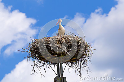 Stork in the nest with baby birds