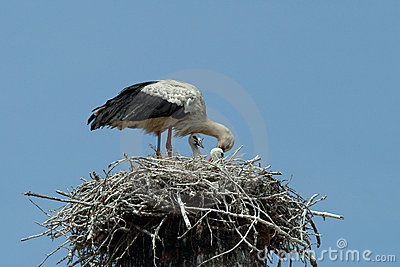 Stork in the nest with the children