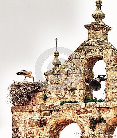 Stork over nest