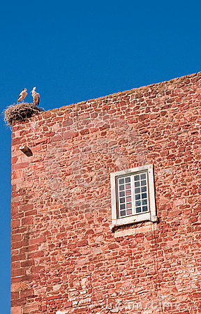 Stork on a roof top