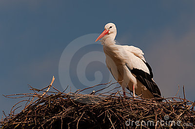 A Stork on its nest