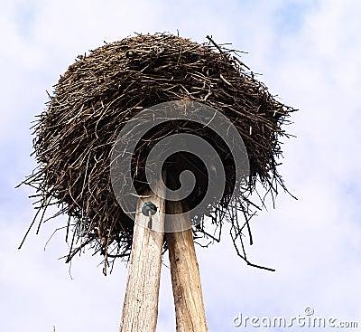 Stork s nest