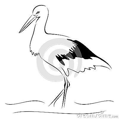 Stork on sketch