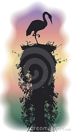 Stork sleeps in a nest