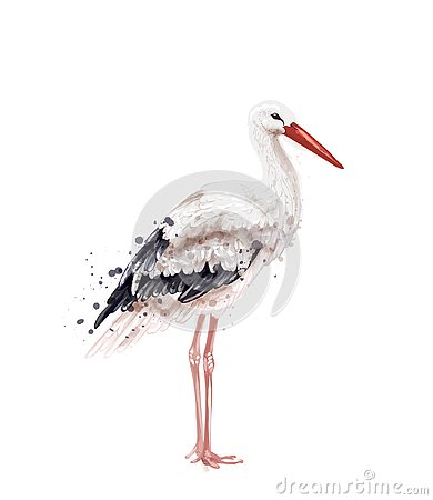 Stork Vector watercolor isolated on white. Icon Painted style illustrations Vector Illustration