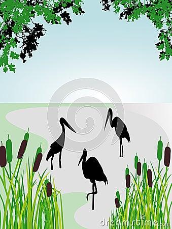 Stork in the wild