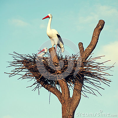 Free Storks In The Nest Royalty Free Stock Image - 48390856