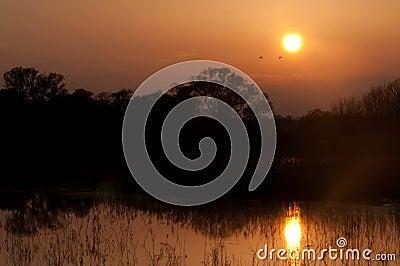 Storks in the lake