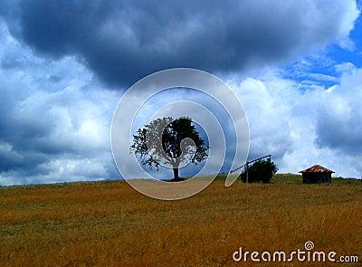Storm....(1)