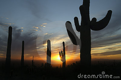 Storm clouds build at sunset in Arizona s Sonoran Desert