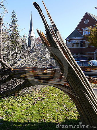 Storm damage: broken tree in city