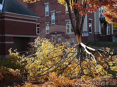 Storm damage: broken tree - h