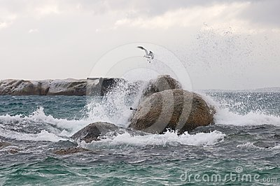 Storm sea bird