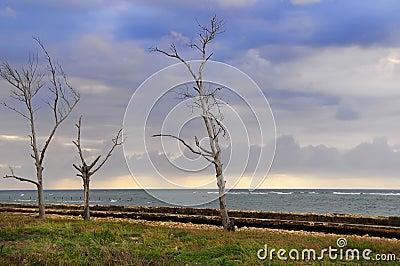 Stormy landscape seaside