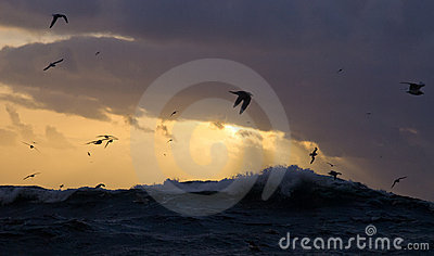 Stormy seas with seagulls
