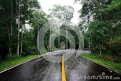Strada bagnata della curva