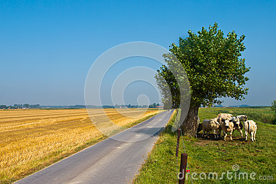 Straight Country Road