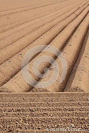 Straight farmland lines